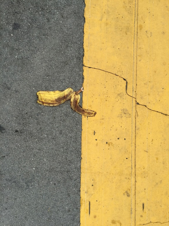 Splat! This guy tried to blend in with the yellow paint on the road, but I spotted him immediately.